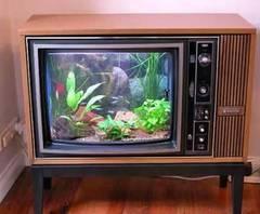 Foto televizor acvariu