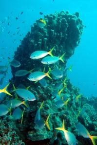 Foto Marea Bariera de Corali