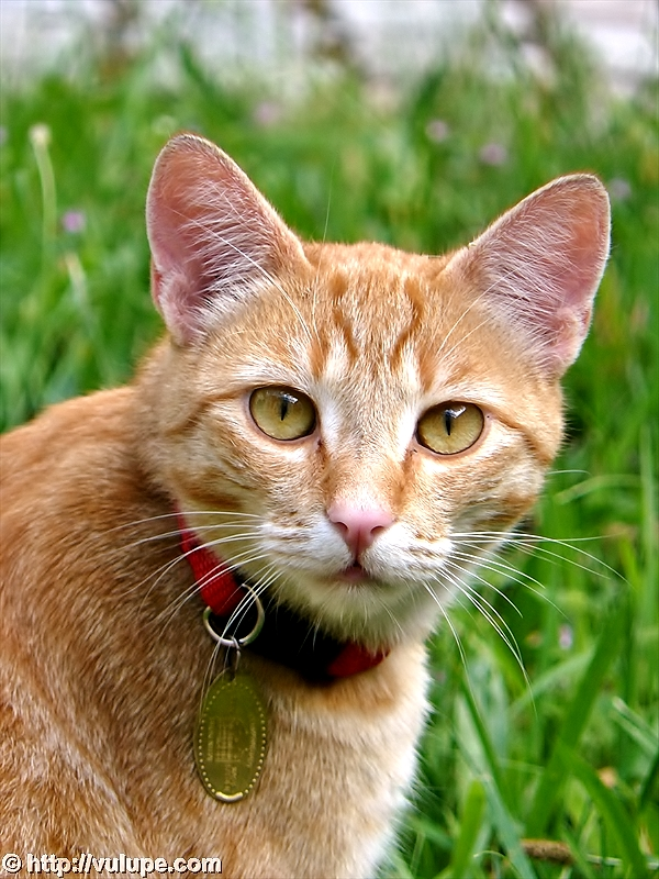 Fotografie - O pisica smechera